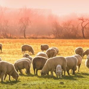 Période hivernale : peut-on laisser les animaux en prairie ?