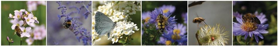 abeilles et co fresquephotos SPW Plan Maya